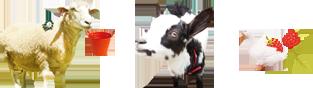 六甲山牧場の動物たち