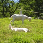 ヤギとのふれあいと餌やり体験