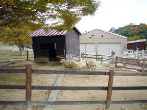 羊ふれあい広場