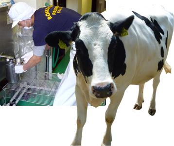 六甲山牧場の牛乳