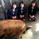 「ホエイ豚」を使った特別メニューが限定販売!