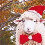 クリスマススペシャル・シープドッグショー