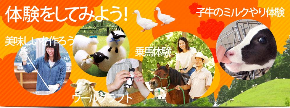 六甲山牧場の体験メニュー
