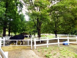 牛舎裏の放牧場