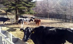 牛の運動場