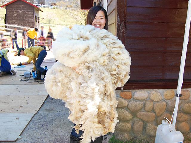 刈り取った羊の毛