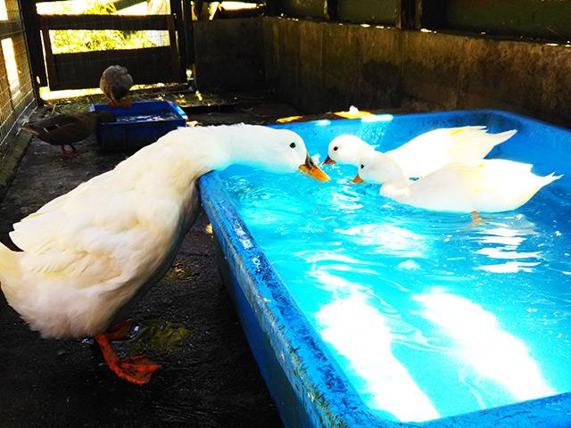 11/1(日) Duck days 終了